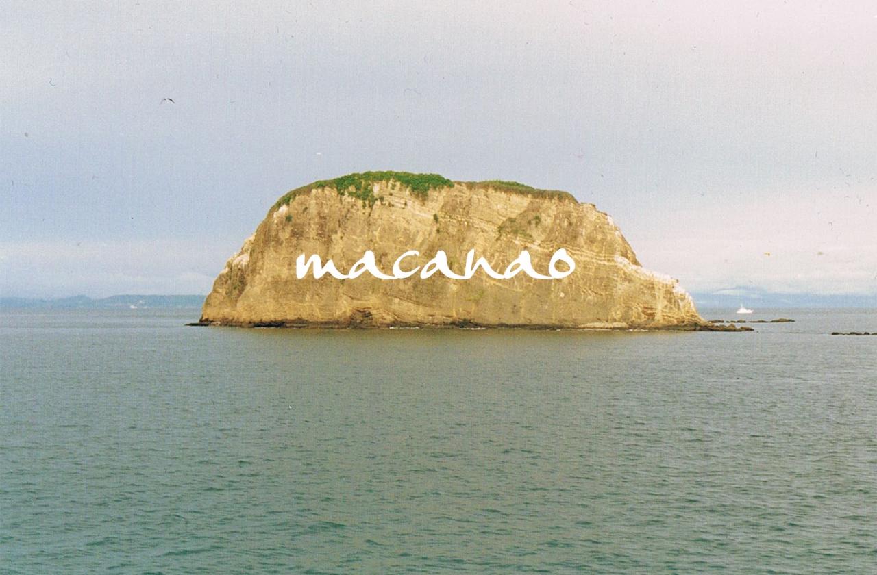chamozolana logo & font design